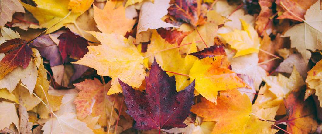 Reach out to Outdoor Landscape for Leaf Removal Services